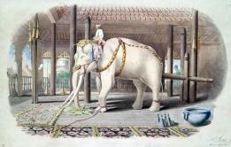 olifant wit