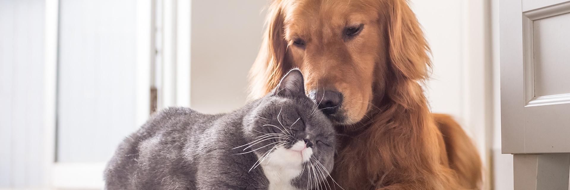 Kat of hond filosofie.