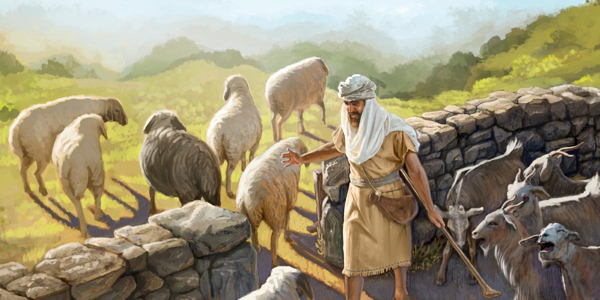Bokken en schapenscheiden.